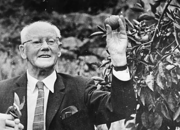 Mustavalkoisessa rintakuvassa puvun takkiin, kauluspaitaan ja kravattiin pukeutunut Felix Iversen seisoo puun vieressä ja pitelee hedelmää.